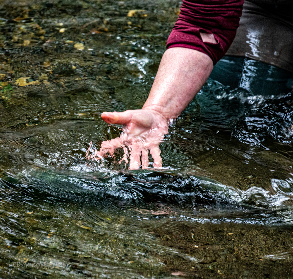 Fish Counting at Johnny Come Latley the release-4809 by theredcamera