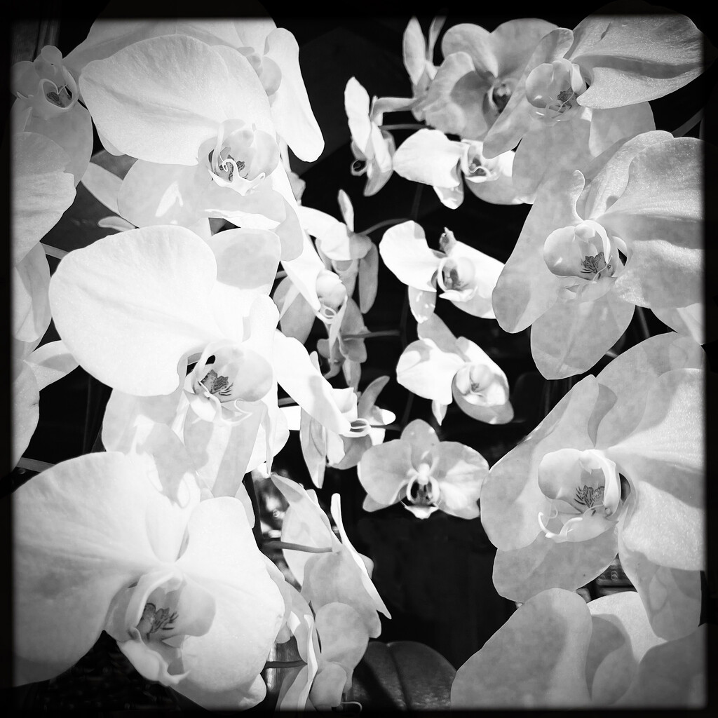 The Fresh Market Orchids by yogiw