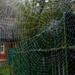 A Wet Spider's Web
