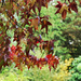 Arboretum leaves