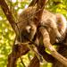 Florida Koala After a Long Night of Partying! by rickster549