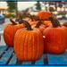 Street Pumpkins