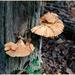 Tree Growing Fungi