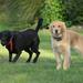 neighbor dogs