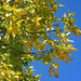 Blue sky and Autumn color