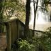 Waterfalling beyond the trees 🌱💦✨