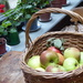 A lovely sample from the orchard
