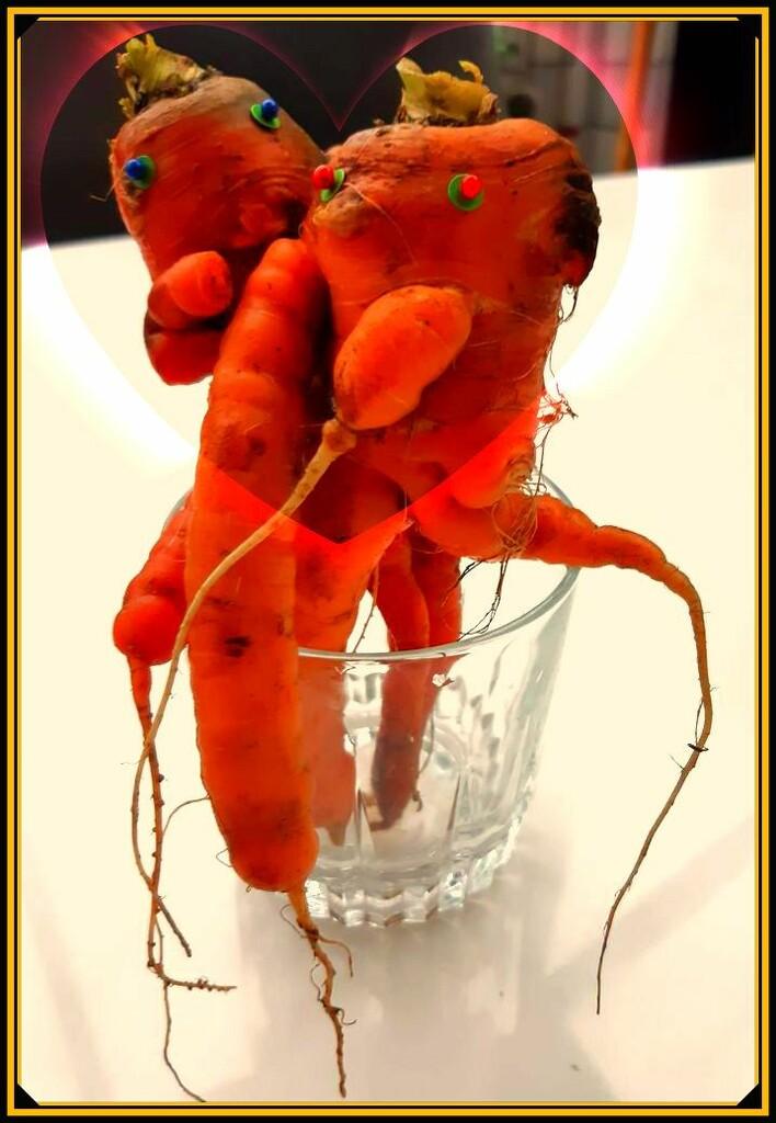 carrot love by gijsje