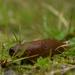 up close slug