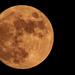 Almost Full Moon!