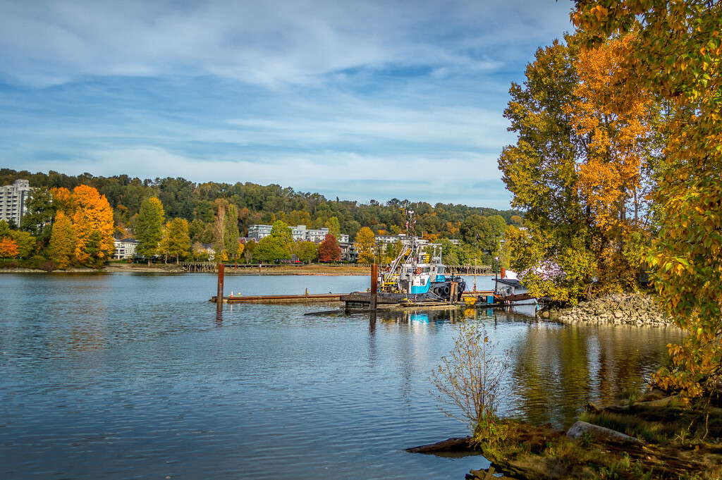 Fall on the Fraser by cdcook48