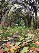 20th Oct 2021 - Leaf Fall