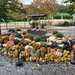 Great gourd display