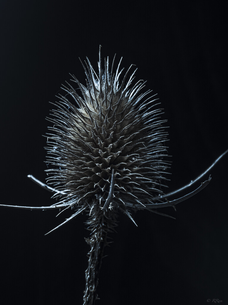 More Thistle by ramr