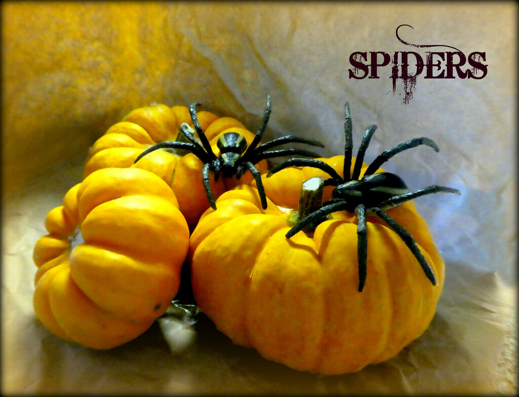 Spiders  by wendyfrost