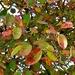 Autumnal Mystery Tree