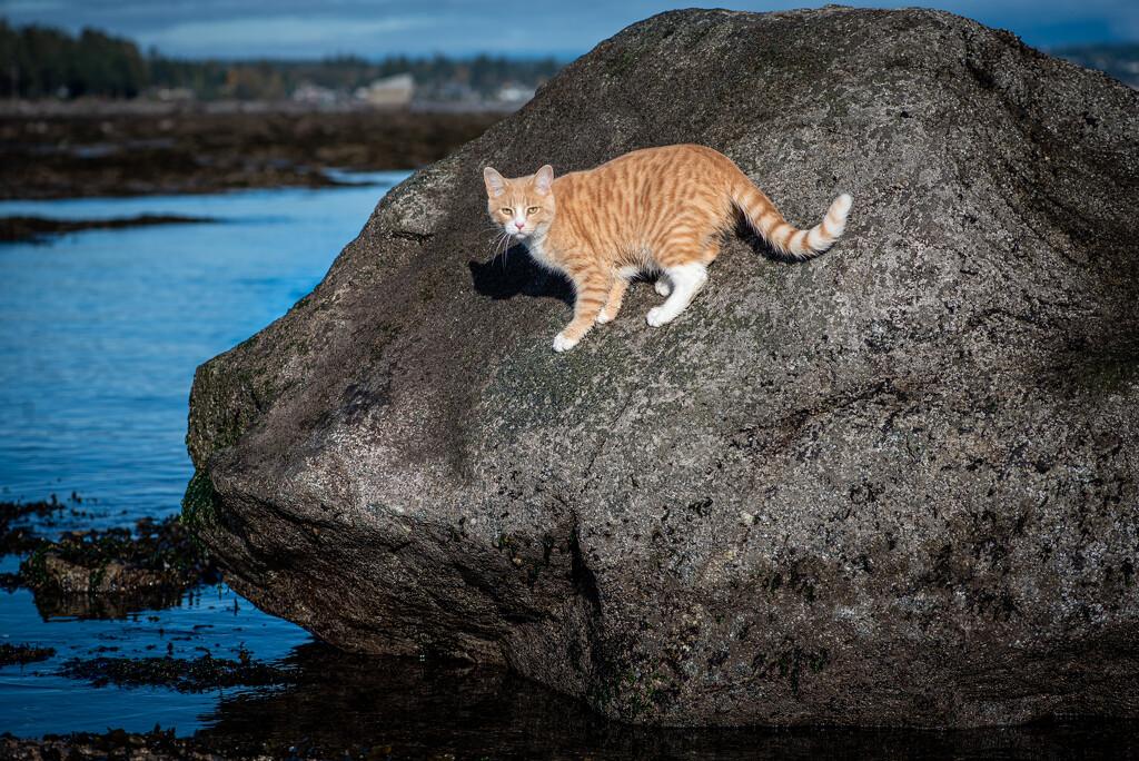 Rock Climbing by kwind