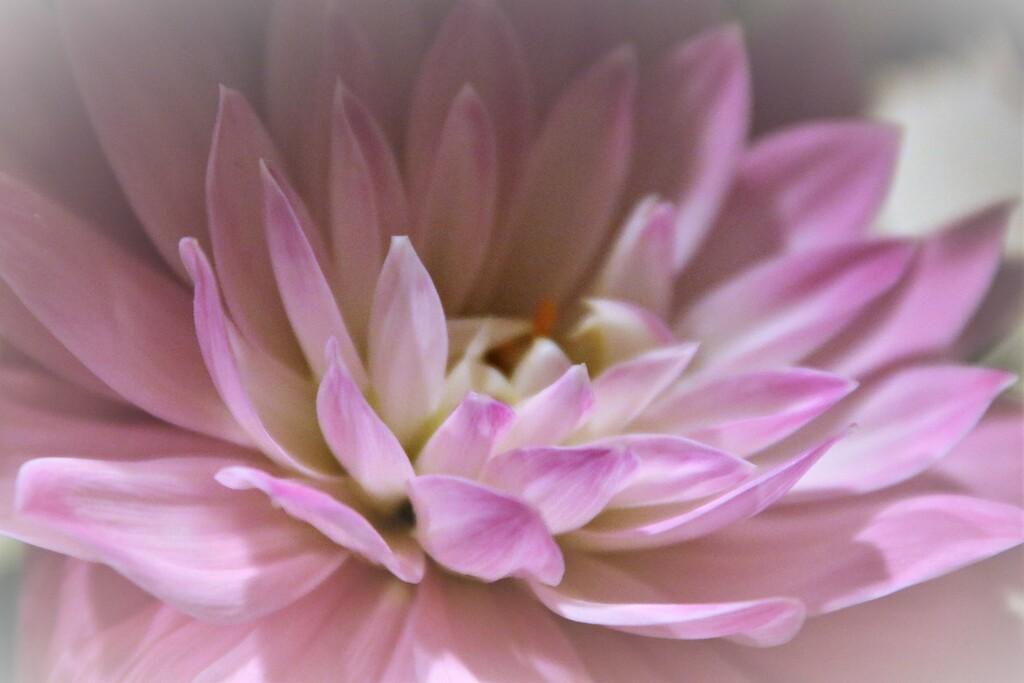 bouquet 1 by edorreandresen