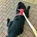 Meet Monty - A shaggy dog story