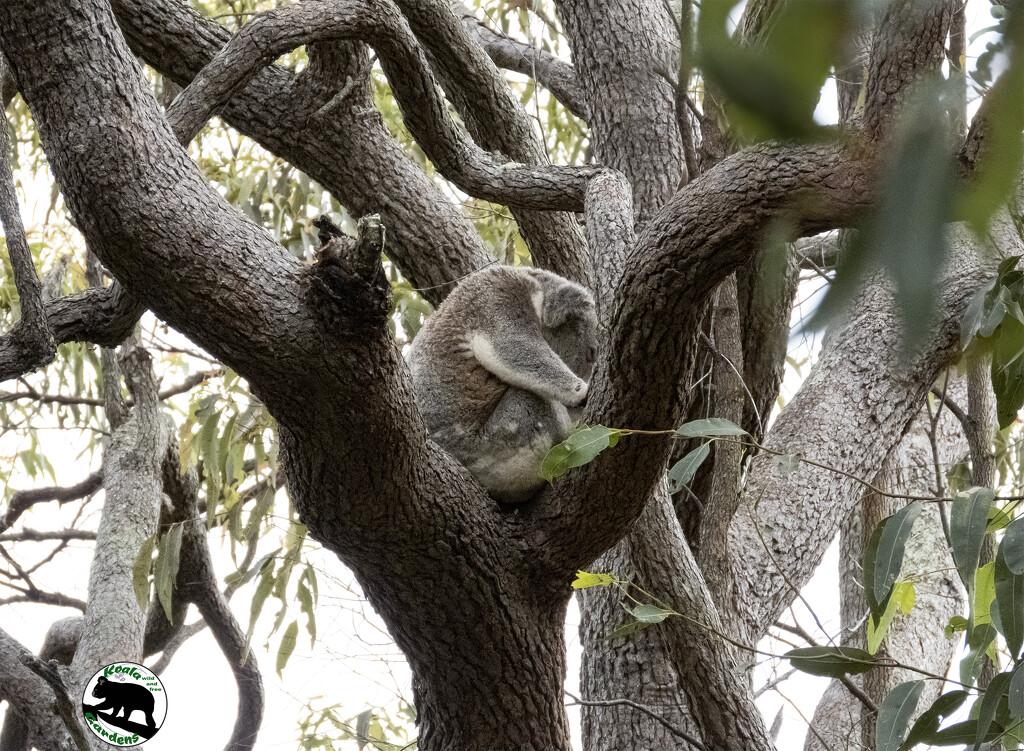 'be the tree' by koalagardens