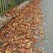Autumn piling up