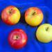 apples 4