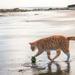 MRGUS_THE_CAT