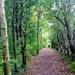 Autumn.. following the path