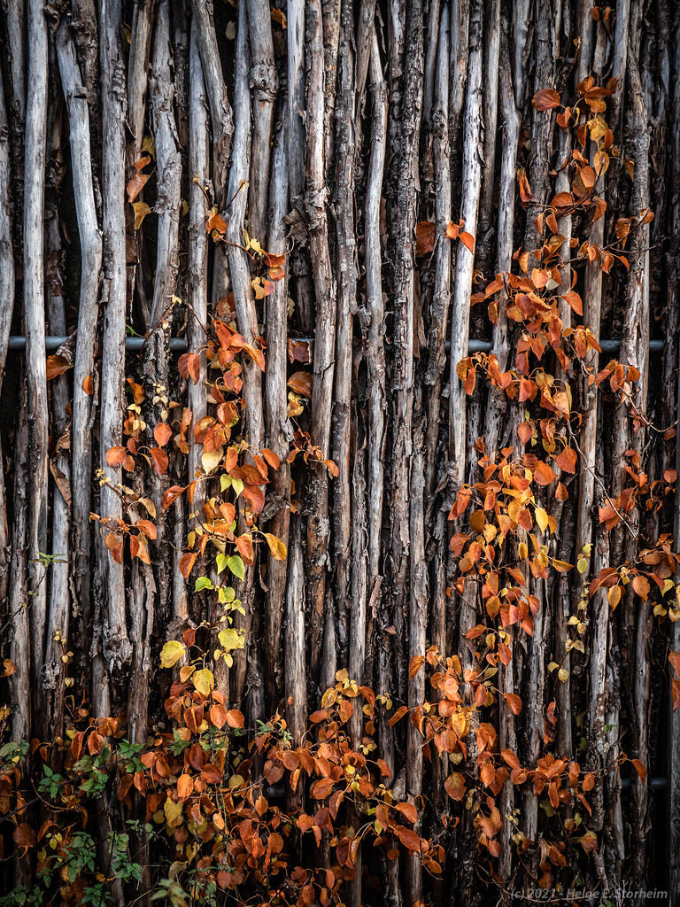 Autumn leaves on a wooden fence by helstor365
