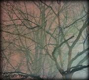 19th Jan 2011 - A Foggy Morning