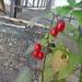 Quintuple #2: Five Berries