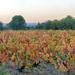 The vineyard, chemin de la Boutade