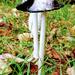 Autumn..  Fungi