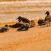 Birds on the Beach!