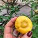 Spanish lemon.
