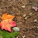 Just Leaf Autumn to Me