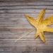 Autumn Star