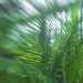 Palm frondiness