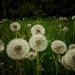 Anyone for weeding....!