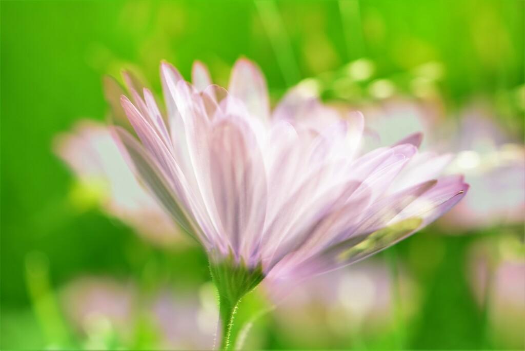 Pretty flowers......... by ziggy77