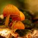 Mushrooms on the Dead Tree Trunk!