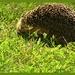 Prickly Little Fella