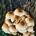 A cluster of fungus