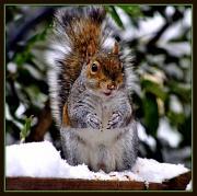 21st Jan 2011 - Squirrel Appreciation Day
