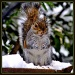Squirrel Appreciation Day by peggysirk