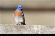 22nd Jan 2011 - Bluebird of Freakin' Happiness