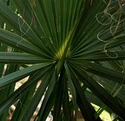 20th Jan 2011 - The Palm