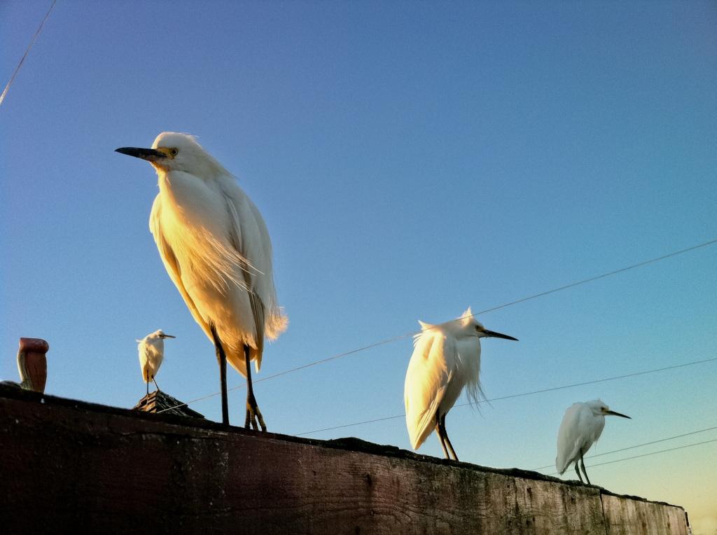 The Gangs of Newport Beach by bradsworld