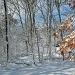Snow again by hjbenson