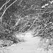 Winter Stream by hjbenson